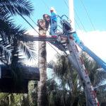 Emergency Tree Removal - Delray Beach, Boca, Boynton - Ck's Tree Service