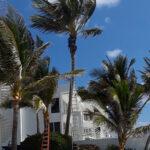 CK's Tree Service - Delray, Boynton, Boca Raton, Tree Trimming, Tree Removal, Stump Grinding (46)