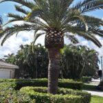 Tree Trimming - CK's Tree Service - Delray Beach, Boca Raton, Boynton Beach