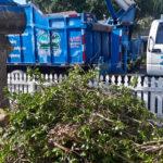 CK's Tree Service Delray Beach, FL - Boca Raton, Delray Beach, Deerfield