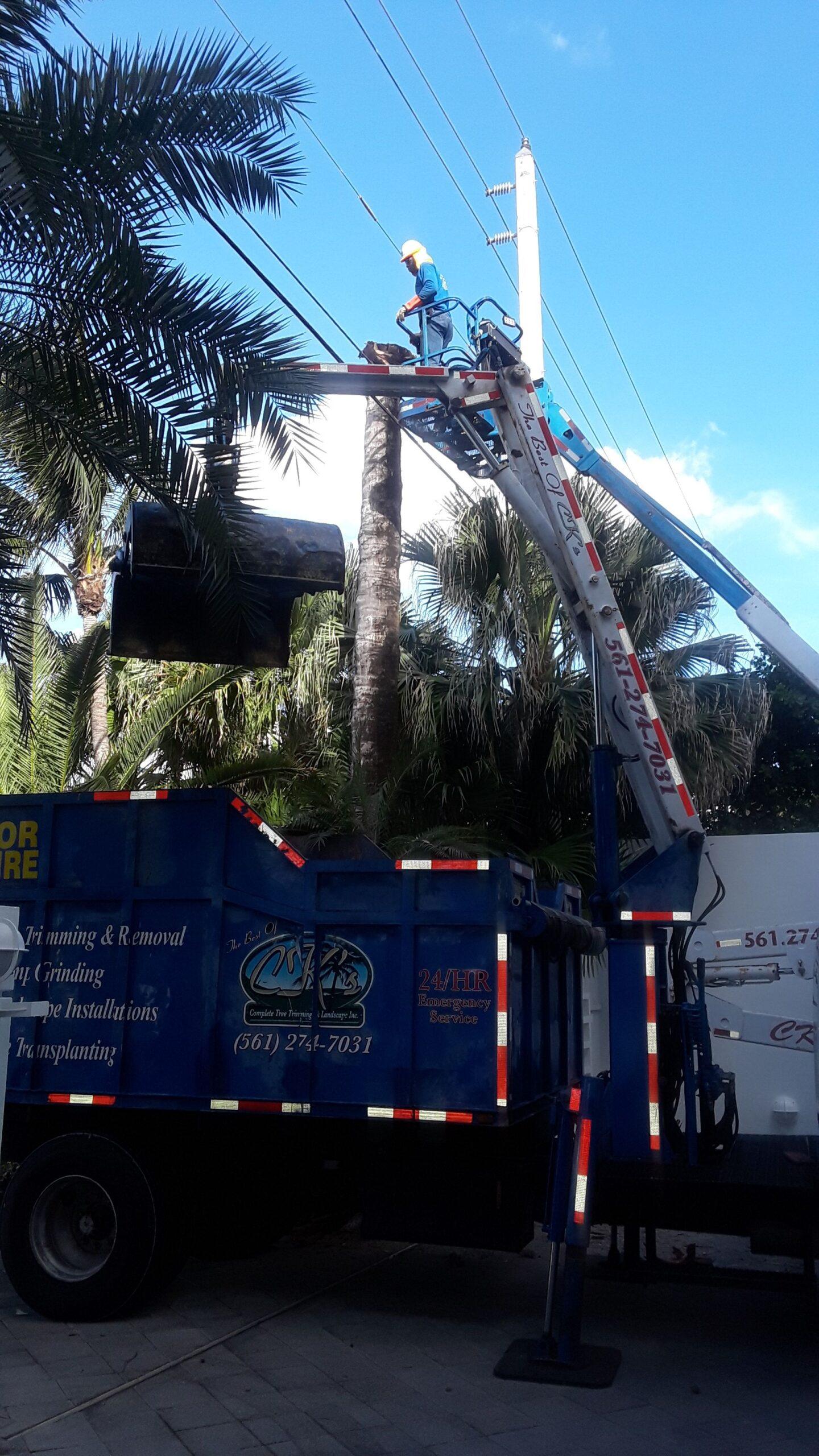 Emergency Tree Removal Dangerous Tree Removal, Delray Beach, Boynton Beach, Boca Raton