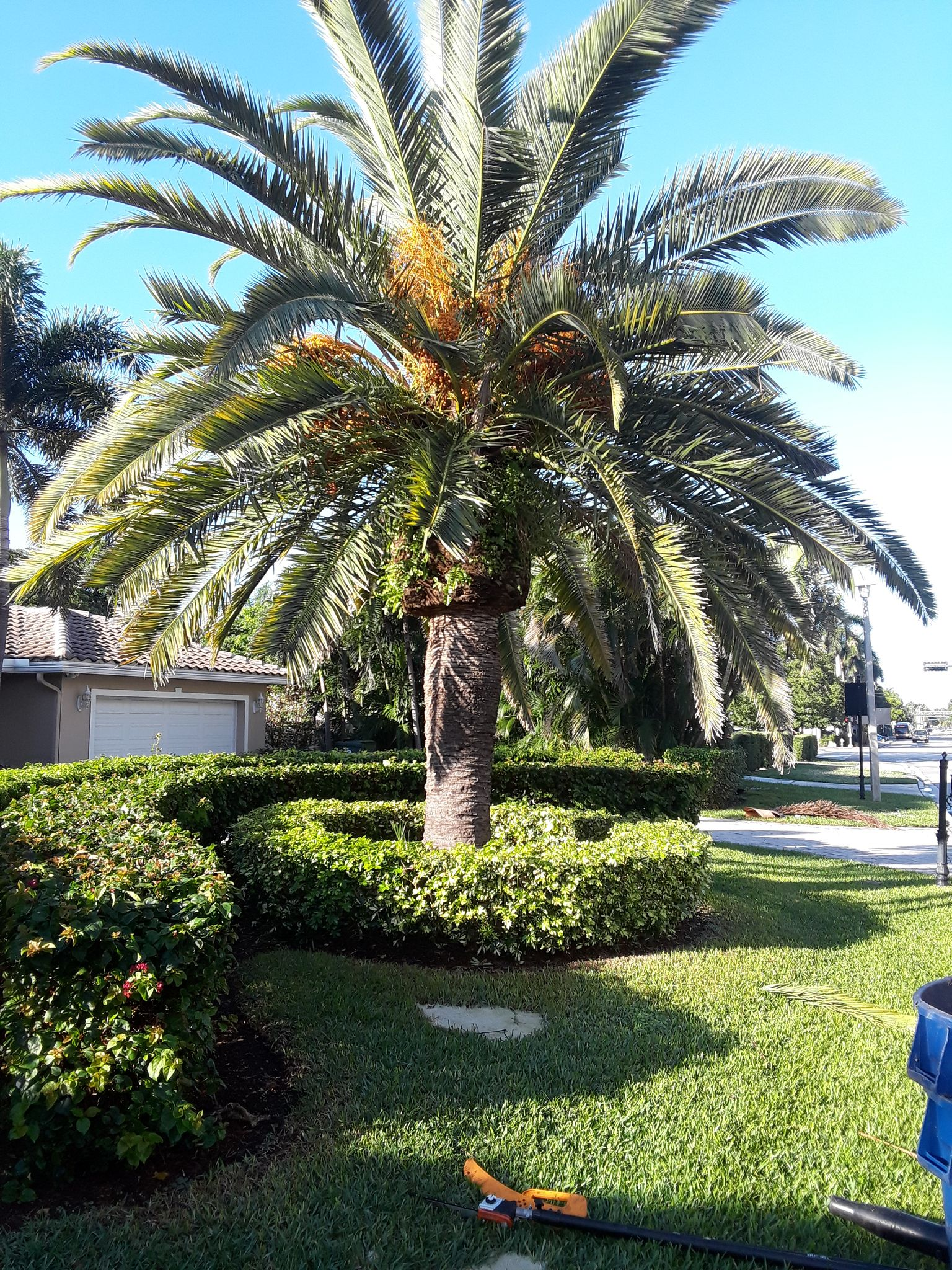 CK Tree Service -Landscaping