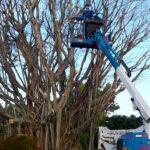 Tree Removal Delray Beach, Boynton Beach, Boca Raton